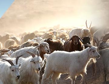 新疆天山毛纺织股份有限公司